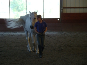 A structured program can help you create a horse that wants to be with you!