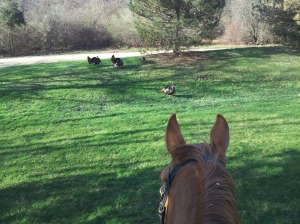 One of my training horses checks out this flock of wild turkeys on one of our trail rides.