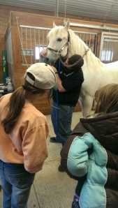 """In our """"First Aid 101"""" clinic participants learn how to check a horse's gums to make sure they are healthy."""